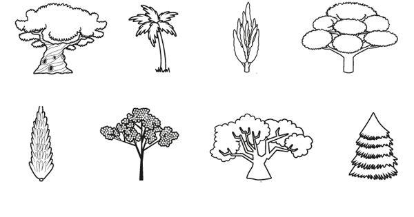 Árboles  Dibujo Para Colorear E Imprimir