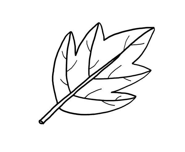 Una Hoja De árbol  Dibujo Para Colorear E Imprimir