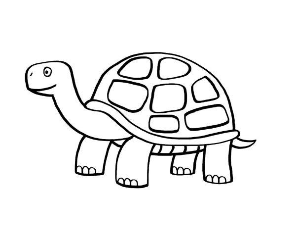 Tortuga  Dibujo Para Colorear E Imprimir