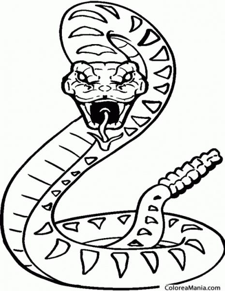 Colorear Serpiente De Hocico Largo 2 (reptiles), Dibujo Para