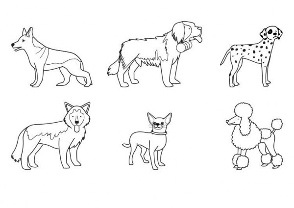 Razas De Perros  Dibujo Para Colorear E Imprimir