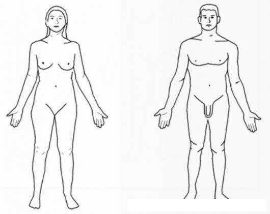 Dibujo De La Figura Humana De Mujer Y De Hombre