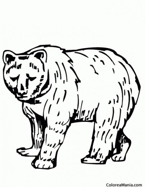 Colorear Oso Pardo Americano (animales De La Selva), Dibujo Para
