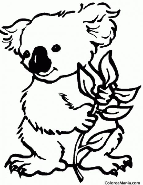 Colorear Koala Con Planta (animales Del Bosque), Dibujo Para