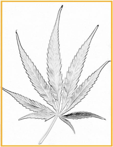 Free Marihuana Para Colorear, Download Free Clip Art, Free Clip
