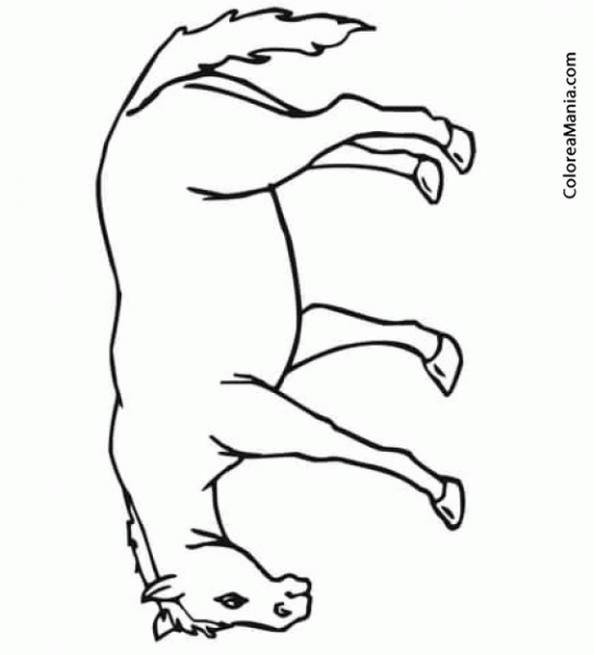 Colorear Mula  Mule  (animales Domésticos), Dibujo Para Colorear