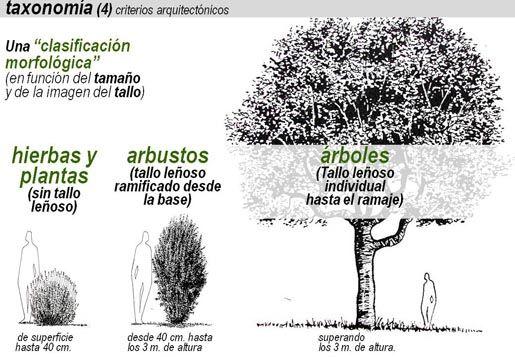 Árboles, Arbustos Y Hierbas