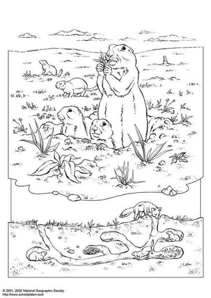 Dibujo Para Colorear Perro De La Pradera