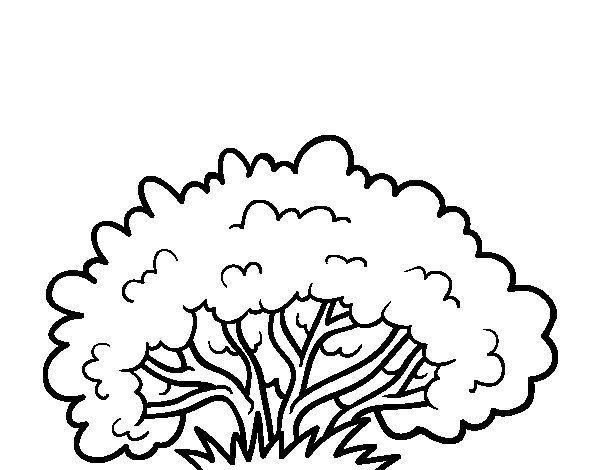 Arbustos Para Colorear – Dibujo