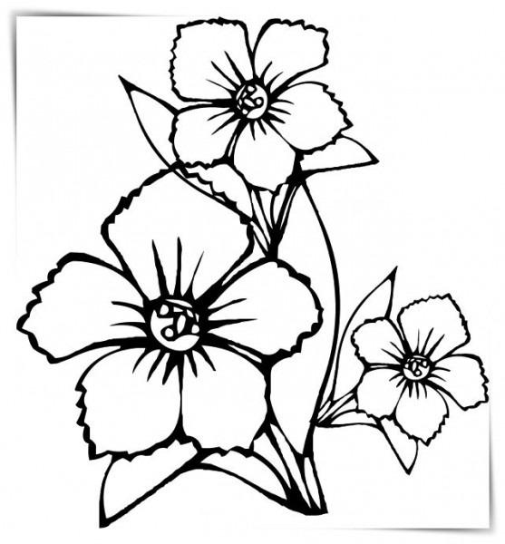 Dibujos Flores Hawaianas Para Pintar A4 🥇 Biblioteca De Imágenes