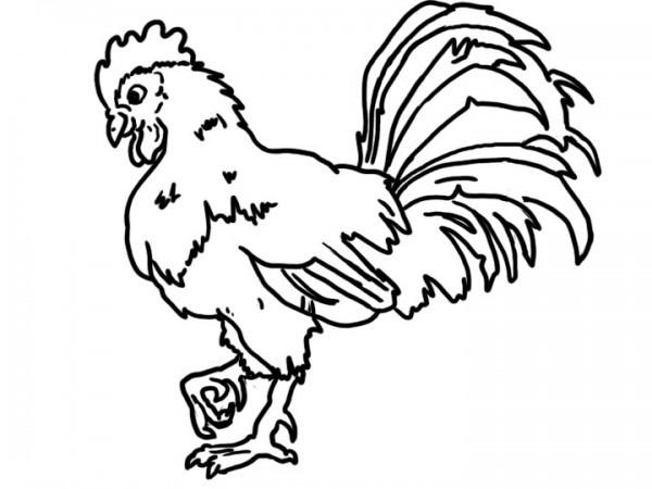 Gallo Para Colorear, Imprimir Y Pintar
