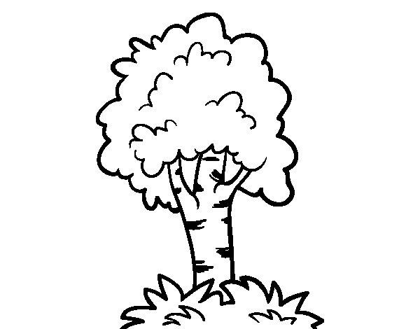 Árbol  131 (naturaleza) – Páginas Para Colorear