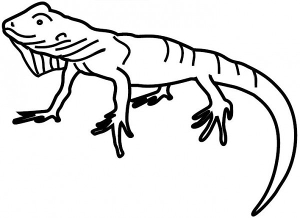 Iguana  18 (animales) – Páginas Para Colorear