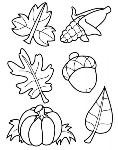 Hojas Y Frutas De Otoño