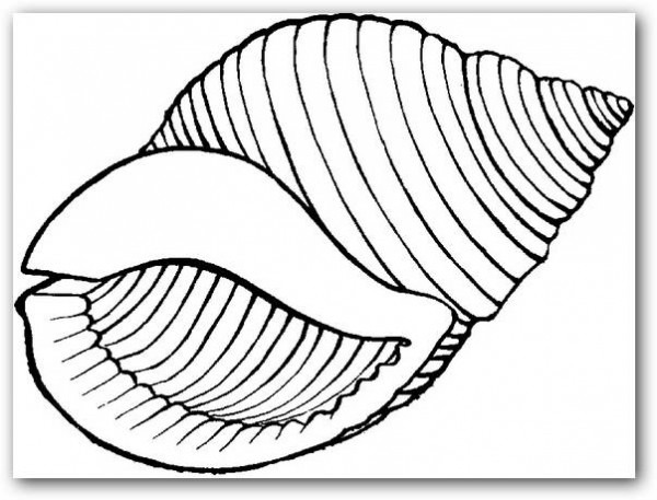 Dibujos Para Colorear Caracoles De Mar