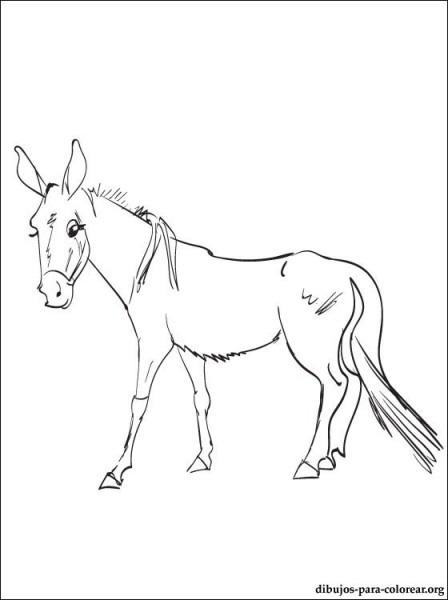 Colorear Dibujo De Una Mula Animal