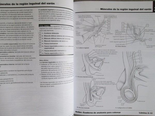 Netter Cuaderno De Anatomia Para Colorear Pdf Descargar