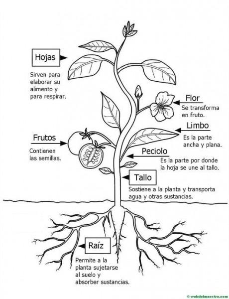 Partes De Una Planta Para Niños De Primaria