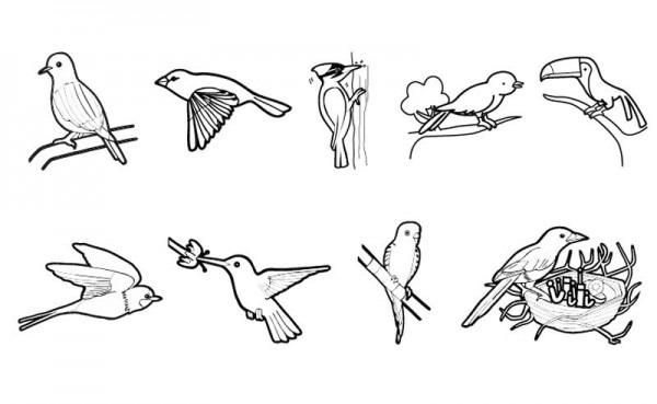 Pájaros  Dibujo Para Colorear E Imprimir