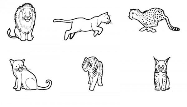 Felinos  Dibujo Para Colorear E Imprimir