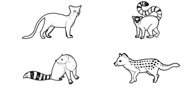 Animales De Madagascar  Dibujo Para Colorear E Imprimir