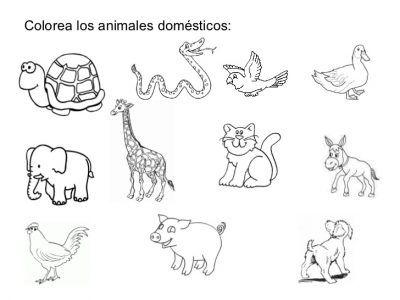 Resultado De Imagen Para Imagen De Animales Domesticos Y Salvajes