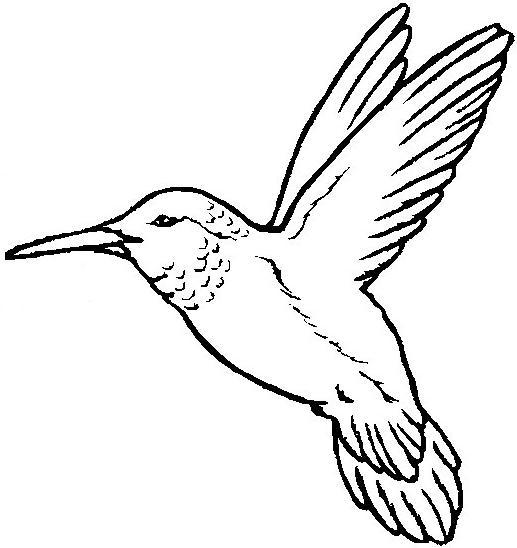 Aves Para Colorear
