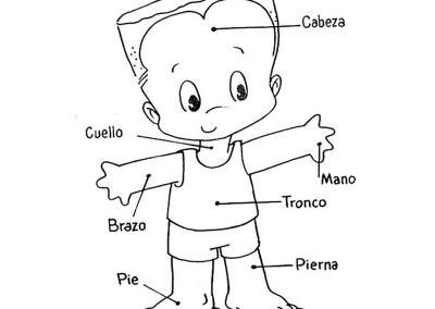 Dibujos Del Cuerpo Humano ® Para Colorear E Imprimir