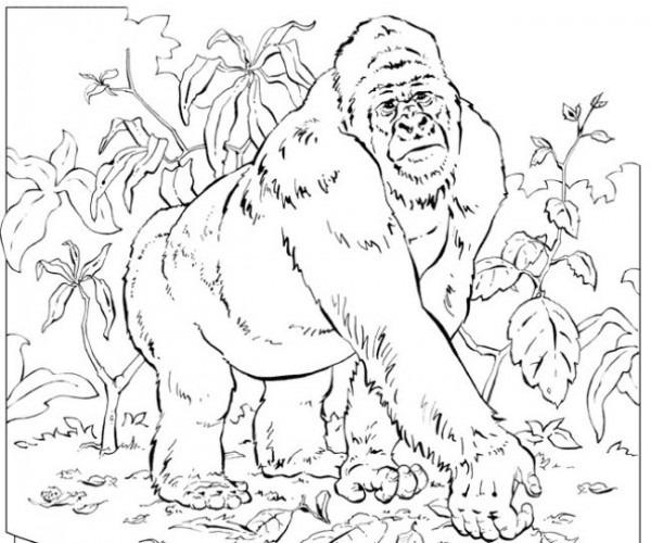 Dibujo Para Colorear A Un Gorila En La Selva    Imágenes Y Fotos