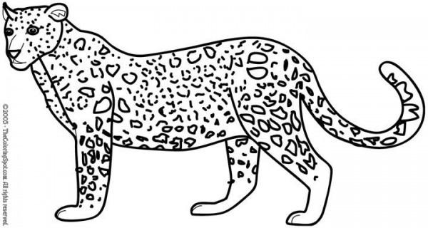 Leopardo  86 (animales) – Páginas Para Colorear