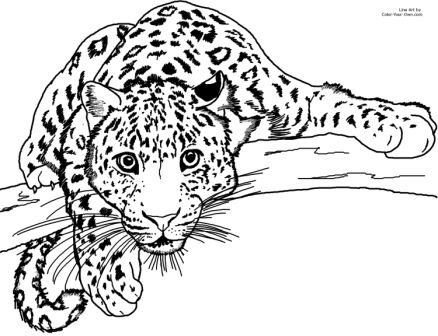 Dibujos De Leopardos » Leopardopedia