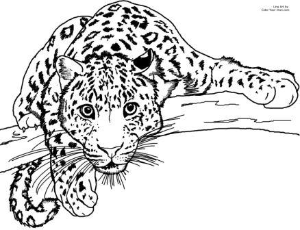 🎨▷ Dibujos De Leopardo Para Colorear