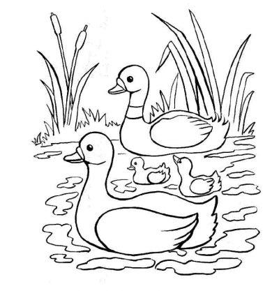 Dibujo De Patos Y Sus Patitos  Dibujo Para Colorear De Patos Y Sus