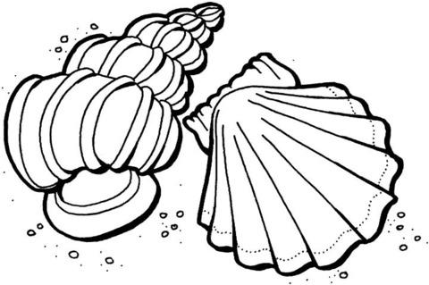 Dibujo De Conchas Del Mar Para Colorear