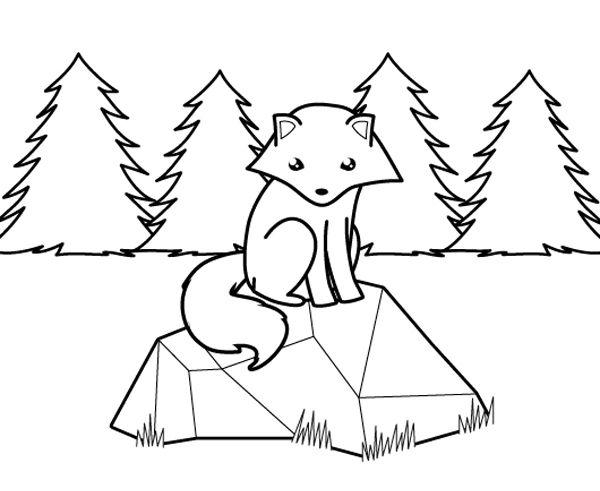 Zorro Polar En El Bosque  Dibujo Para Colorear E Imprimir