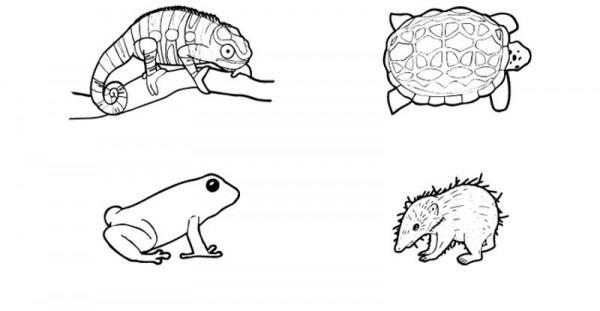 Más Animales De Madagascar  Dibujo Para Colorear E Imprimir