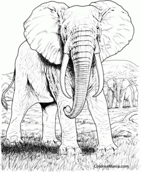 Colorear Elefantes Africanos, Dibujo Realista (animales De La