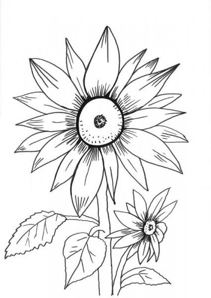 Girasoles  Dibujo Para Colorear E Imprimir