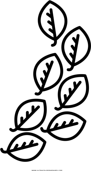 Download Hd Laurel Leaves Coloring Page