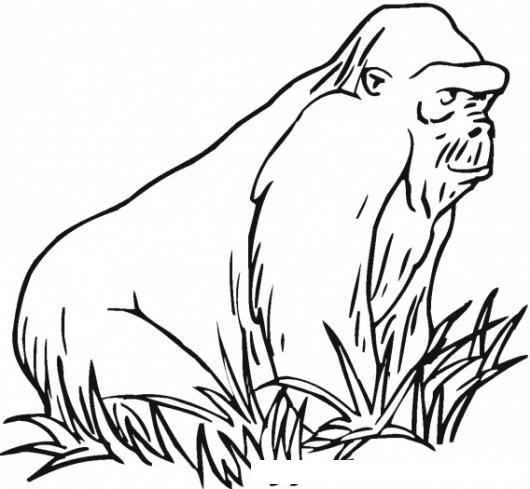 Simio En El Monte Para Pintar Y Colorear Orangutan Sobre La Grama