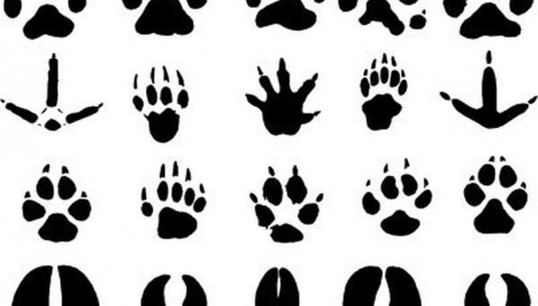 → Cómo Hacer Huellas De Animales Utilizando Sellos De Goma