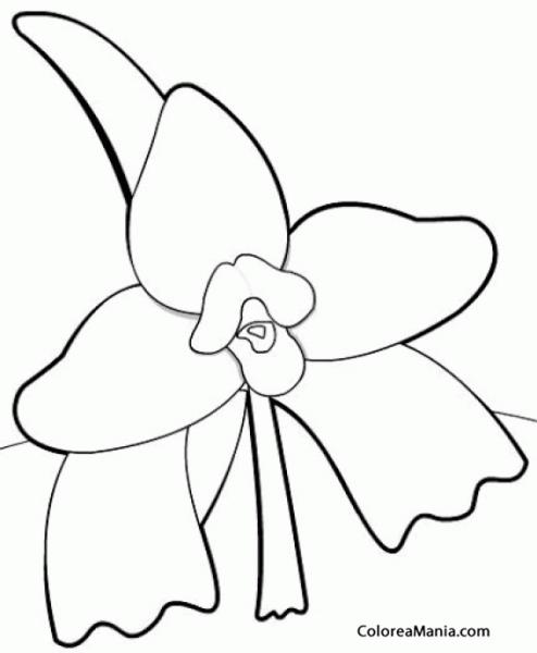 Colorear Monja Blanca (flores), Dibujo Para Colorear Gratis