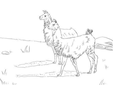 Dos Llamas Dibujo Para Colorear  Categorías  Llama  Páginas Para