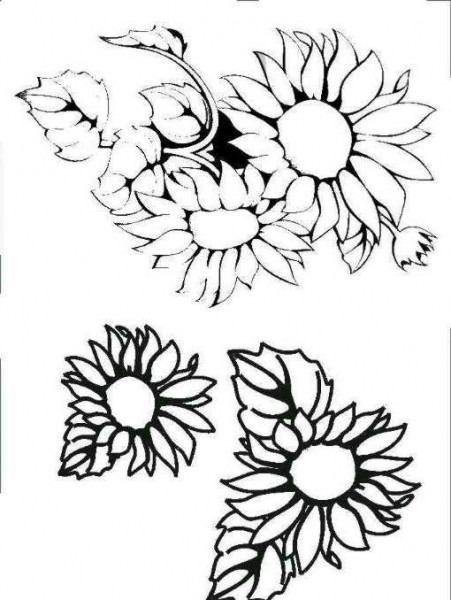 Dibujos Y Plantillas Para Imprimir  Girasoles