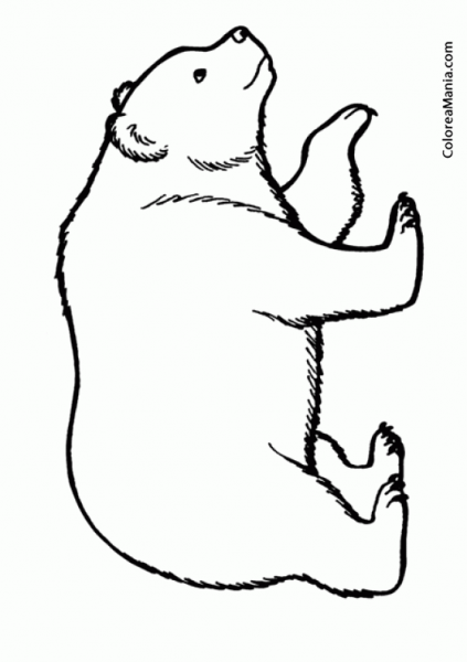 Colorear Oso Polar 3 (animales Polares), Dibujo Para Colorear Gratis