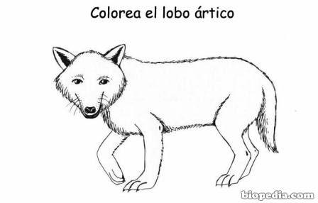 Imagenes De Zorro Artico Para Colorear