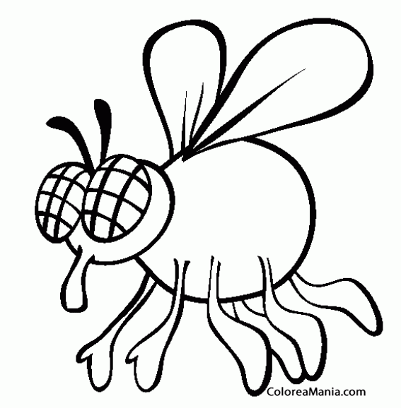 Colorear Mosca  Fly Antenas Negras (insectos), Dibujo Para