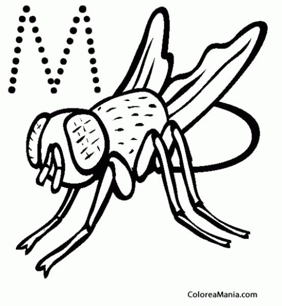 Colorear M De Mosca (insectos), Dibujo Para Colorear Gratis