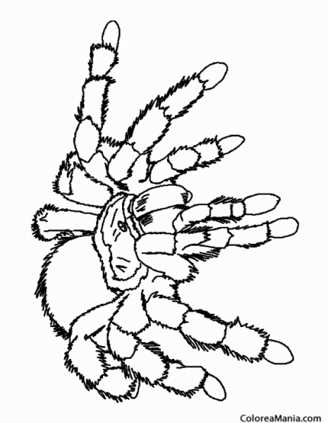 Colorear Tarántula Blanca (insectos), Dibujo Para Colorear Gratis