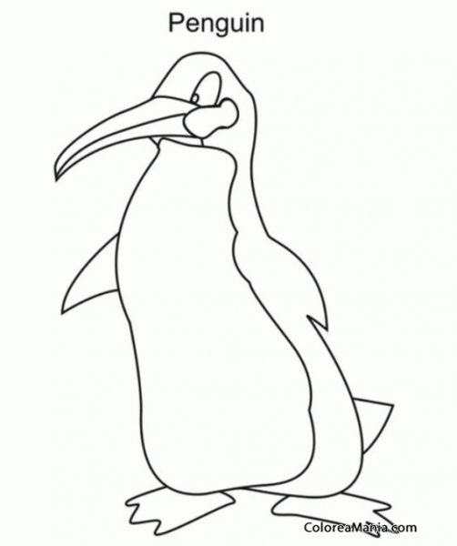 Colorear Penguin Es Pingüino En Inglés (animales Polares), Dibujo